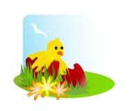 Huhn in einem unterbrochenen Ei Stockbilder