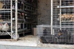 Huhn für Verkauf im Käfig auf dem Auto Tiermissbrauch Landwirtschaftlicher Markt Stockfotografie