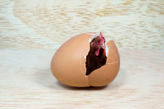 Huhn im Ei Lizenzfreie Stockfotos