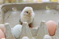 Huhn im Eikasten Lizenzfreie Stockfotos