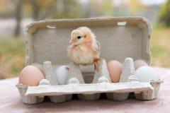 Huhn im Eikasten Lizenzfreie Stockbilder