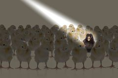 Huhn im Scheinwerfer Stockfoto