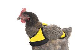Huhn mit gelber Weste stockbilder