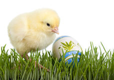 Huhn mit gemaltem Ei Stockbild
