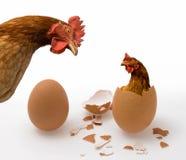Huhn oder Ei Stockbild