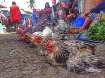 Huhn oder Pfau Lizenzfreie Stockbilder