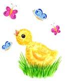 Huhn und Basisrecheneinheiten Stockfoto