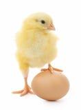 Huhn und Ei Lizenzfreie Stockfotos