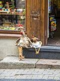 Huhn zwei, das auf den Schritten als Freund sitzt Stockbilder