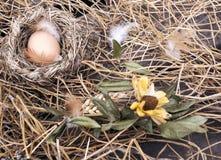 Huhnei im Vogelnest Lizenzfreies Stockbild