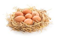 Huhneier im Nest lizenzfreies stockbild