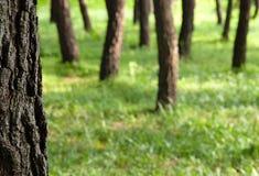 Huid-en-zoek in het hout Royalty-vrije Stock Foto