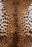 Huid van de luipaard royalty-vrije stock foto