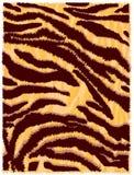 Huid van de tijger Stock Afbeelding