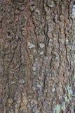 Huid van een boom Stock Foto's
