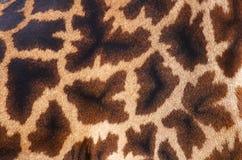 Huid van giraf Royalty-vrije Stock Foto's