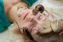 Huidbehandeling en regeneratie met slakken stock foto