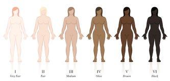 Huidtypes Vrouw Eerlijk Pale Blonde Brown Black royalty-vrije illustratie