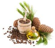 Huile, écrous et cônes d'arbre de cèdre Photographie stock libre de droits