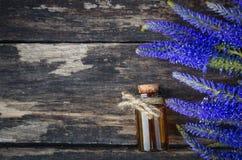 Huile essentielle de fleur de longifolia de Veronica photos libres de droits