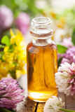 Huile essentielle et herbes médicales de fleurs Photo stock