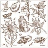 Huilez la collection d'ingrédients naturels a isolé les illustrations monochromes Images stock