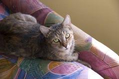 Huis Cat Resting op een Kleurrijke Stoel Royalty-vrije Stock Afbeelding