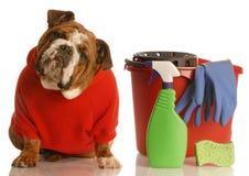 Huis dat een puppy opleidt Stock Fotografie