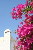 Huis en bloemen. Stock Foto's