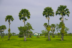 Huis en bomen stock afbeeldingen