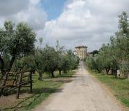 Huis en olijfbomen Royalty-vrije Stock Afbeeldingen