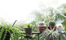 Huis en tuinconcept boom en installatiedecoratie bij balkon Stock Afbeeldingen