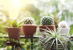 Huis en tuinconcept boom en installatiedecoratie bij balkon Royalty-vrije Stock Afbeelding