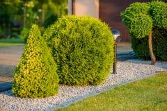 Huis Front Garden Plants Stock Foto's