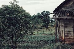 Huis in het bos royalty-vrije stock foto