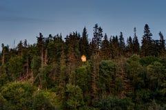 Huis in het bos in Ninilchik in Alaska Verenigde Staten van Amer Stock Afbeelding