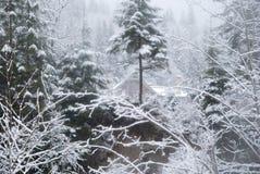 Huis in het de winterbos met snow-covered bomen en sneeuwval Royalty-vrije Stock Afbeelding