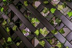 Huis het houten decoratieve rooster schermen royalty-vrije stock foto