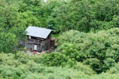Huis in het tropische bos Stock Foto's