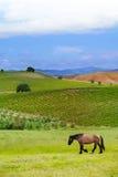 Huis in hoogland van het landschap van Toscanië, Italië Stock Afbeeldingen