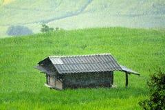 Huis of hut die in het midden van groene padievelden met zware regenachtig blijven royalty-vrije stock foto