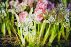 Huis in kleurrijke brieven en de lentebloemen Royalty-vrije Stock Fotografie