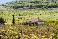 Huis met een betegeld dak onder wijngaarden Royalty-vrije Stock Fotografie