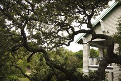 Huis met levende eiken boom. Stock Afbeelding