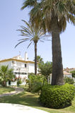 Huis met palmen royalty-vrije stock foto's