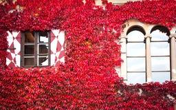 Huis met rode klimop Stock Afbeelding