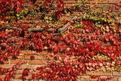 Huis met wijn in de herfst Royalty-vrije Stock Afbeeldingen