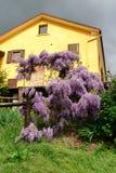 Huis met wisteria Stock Afbeeldingen