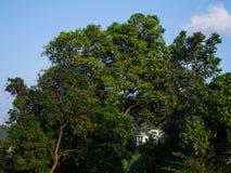 Huis op een heuvel door de bomen op Koh Phangan stock foto