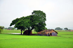 Huis op padiegebied in Bago die, Myanmar wordt gevestigd Stock Afbeelding